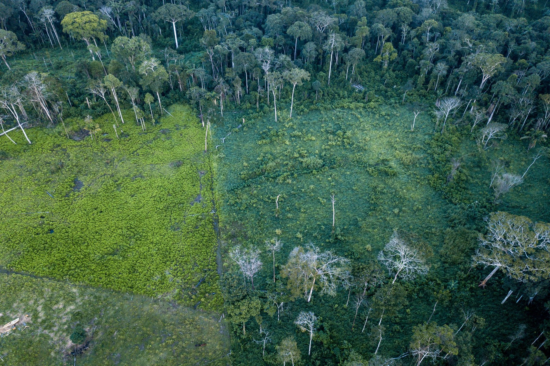 Forest carbon offsets not working as planned, a damning ProPublica piece reveals